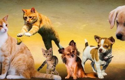Cats and dogs the secret to great communication